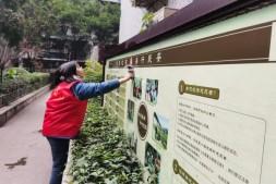 巴渝公益组织志愿者参加全国文明城区建设整改提升志愿服务活动
